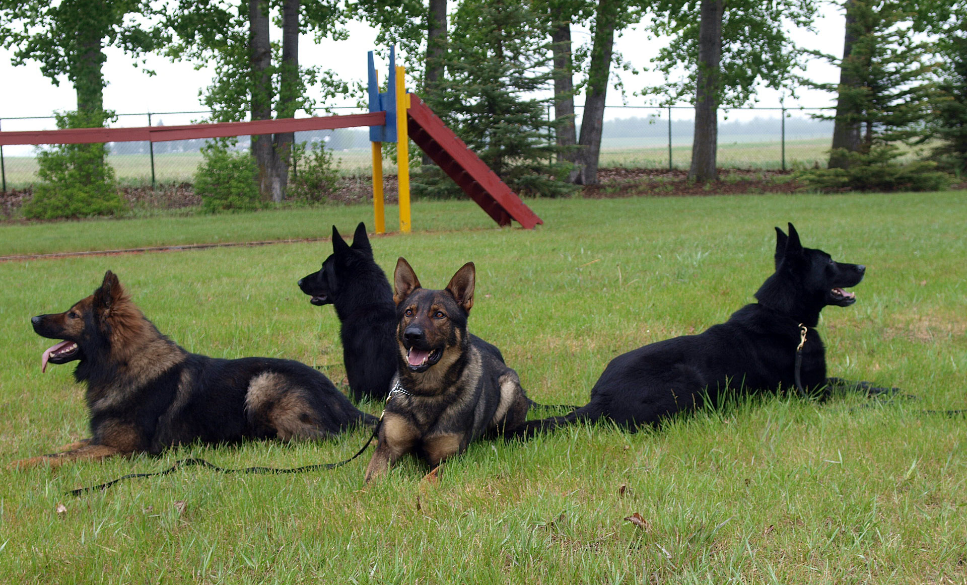 four police dogs